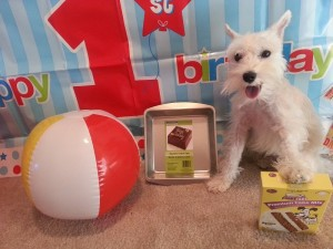 Dogs first birthday