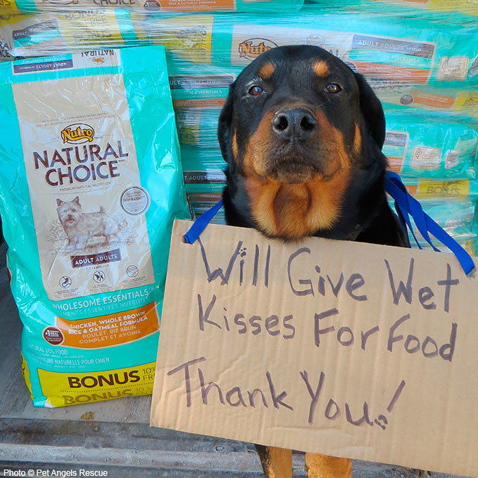 Dog Food Donation To Rescue