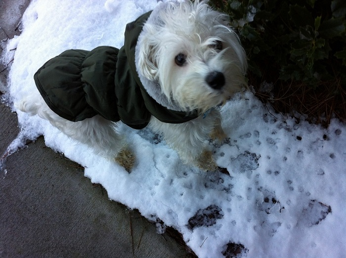 Winter Dog Safety-Simba-Snow-Paw-Prints ft
