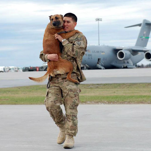 soldier-coming-home-war-dog