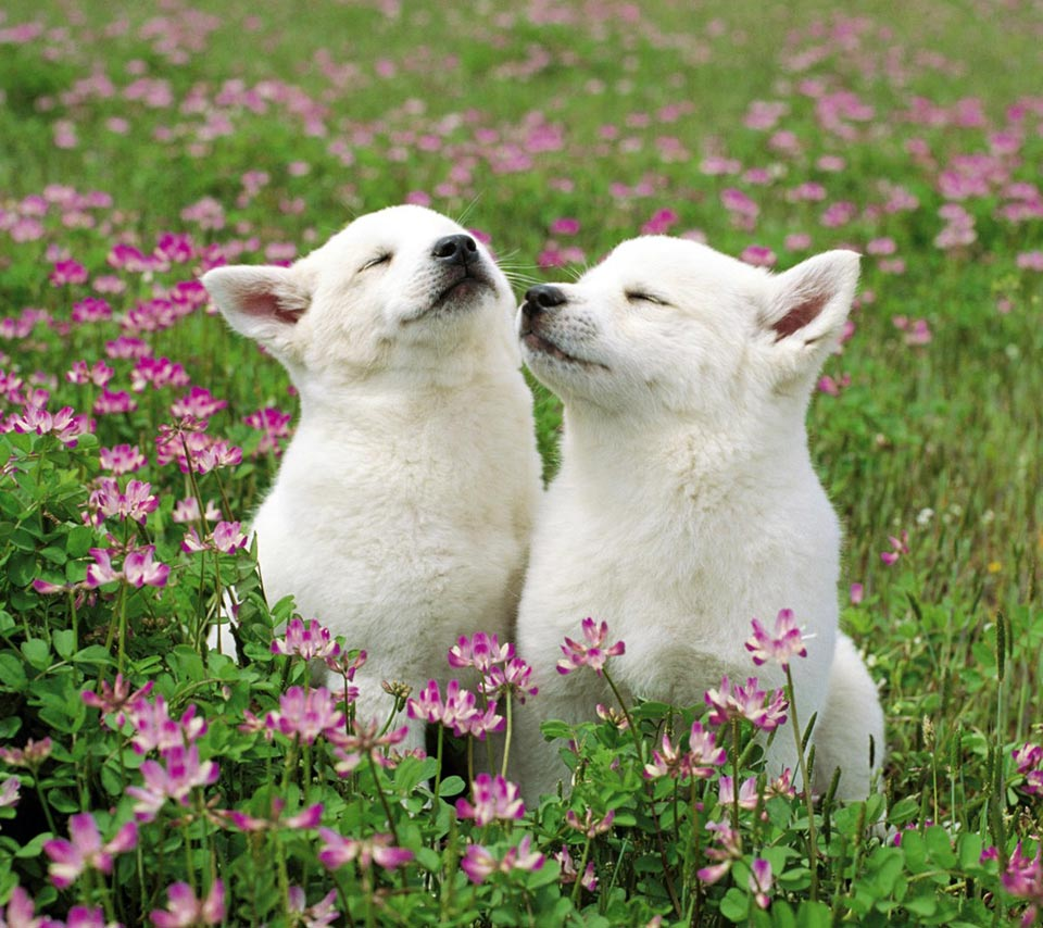 Dogs smelling flower