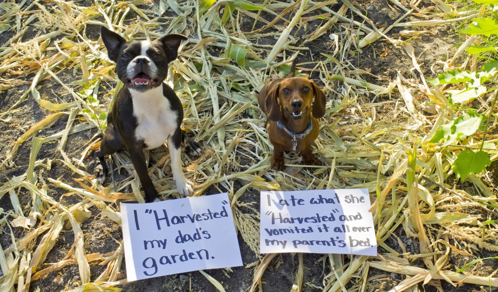 Spring Tips Keep Your Dogs Safe While Gardening 3MillionDogs – Garden Plants Toxic to Dogs