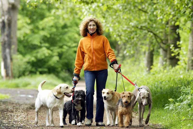 How to choose the right dog walker 3milliondogs
