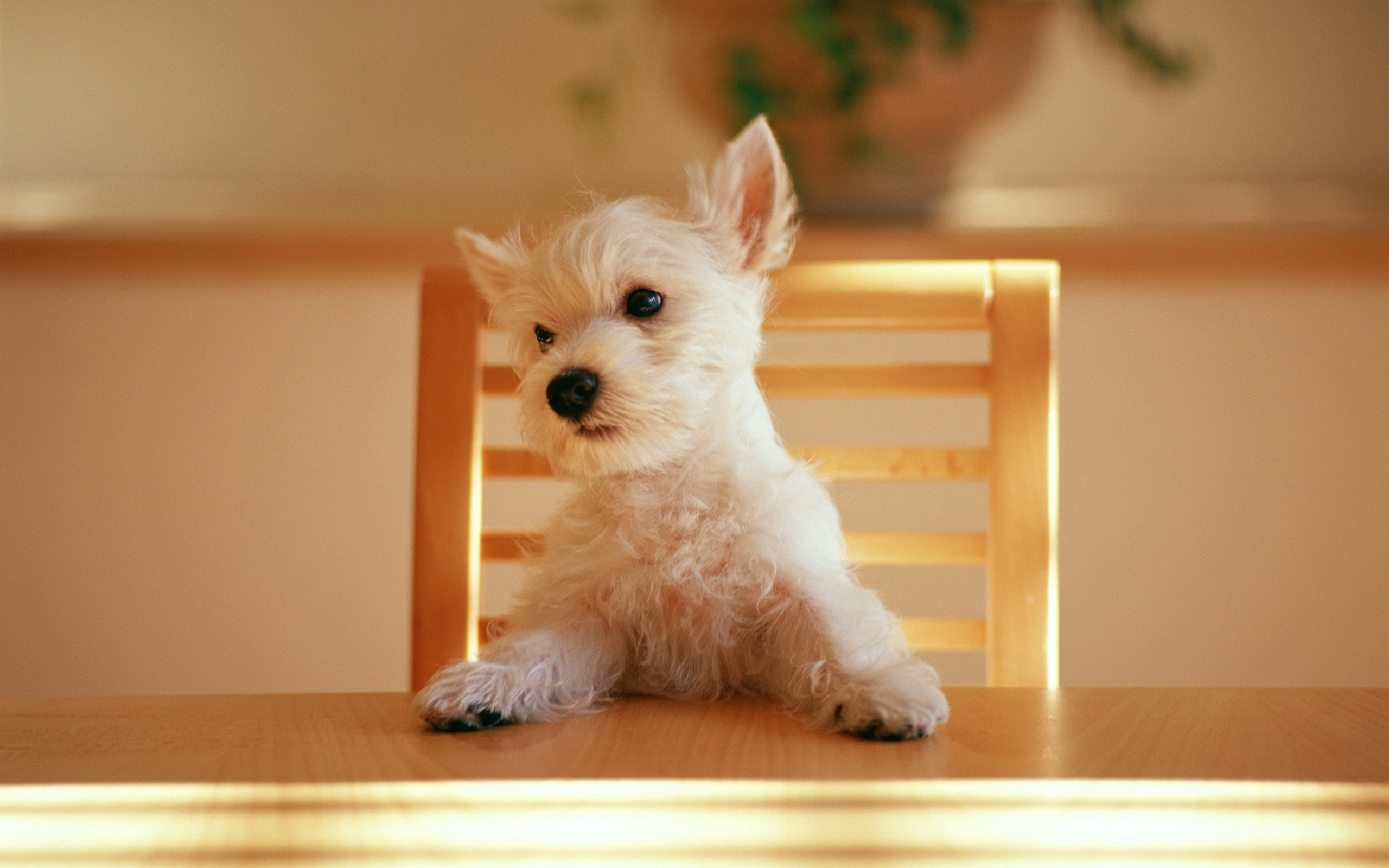 _dog-at-the-table-animals-in-nature-free-wallpaper