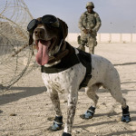 Sergeant Shanks and Haus working together at an undisclosed location in Southwest Asia.