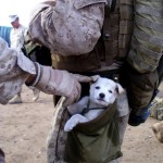 It only takes a bit of compassion to show how much you care. This dog was following the unit for several miles until a marine picked up the puppy and put it his pouch.