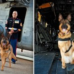 Lucca, a military hero dog lost her leg from a roadside bomb in Afghanistan saved a platoon of U.S. Marines.