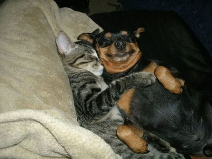 cat-hugs-dog