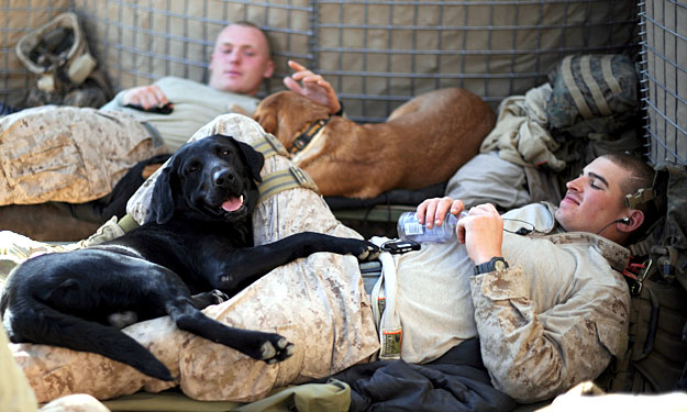 soldiers-with-their-military-dogs