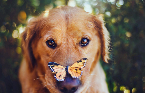 butterfly_on_dog-5211