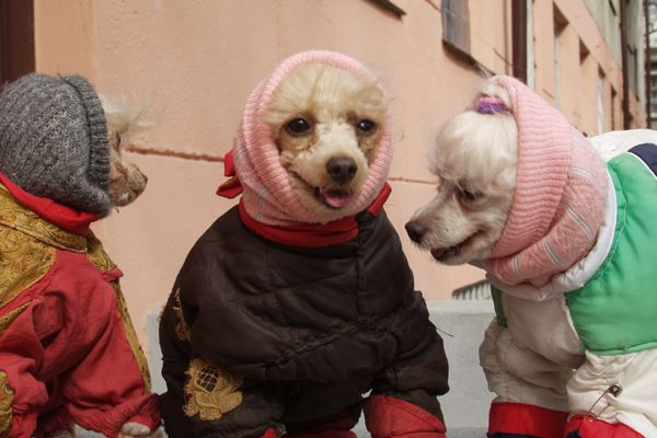 cold_dogs