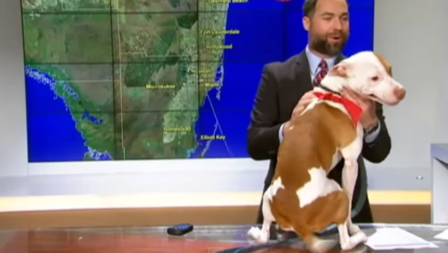 dog interrupts news