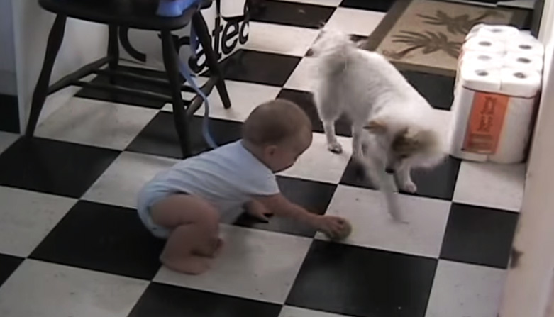 dog teaches baby
