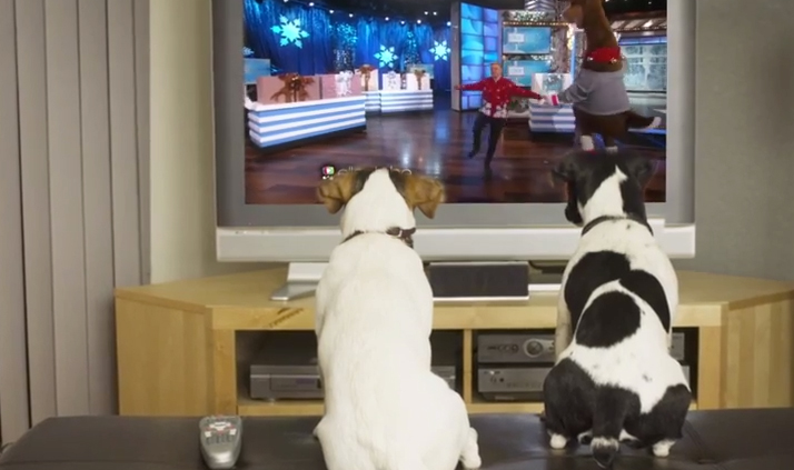 dogs watching ellen