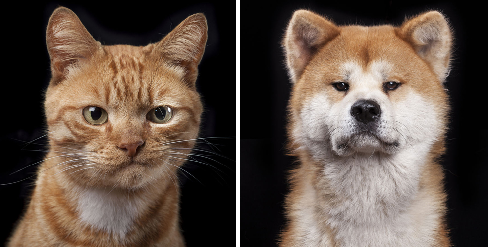 Close-Personal-Portraits-of-Dogs-Cats-and-Horses