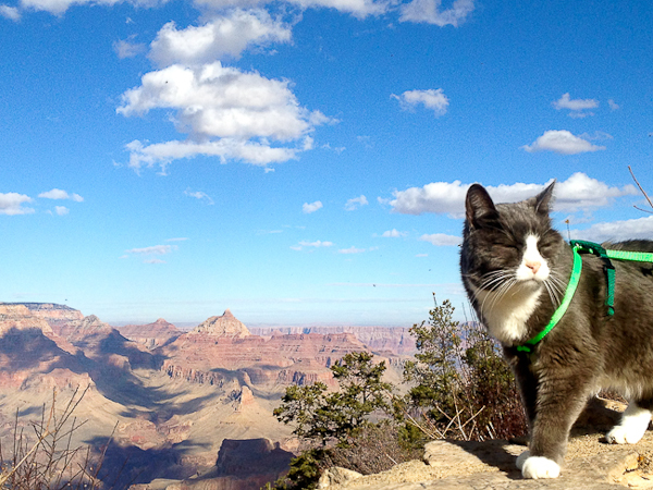 How To Take A Cat On A Long Road Trip