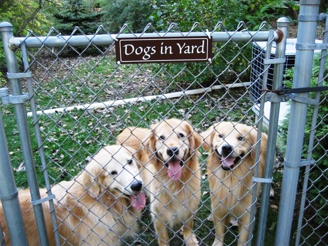 how to prevent your dog from escaping your yard 3milliondogs. Black Bedroom Furniture Sets. Home Design Ideas