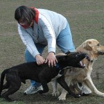 3. Bringing An Aggressive Dog Into The Park: Know the temperament of your dog. Is it easily frightened? Does it react poorly in hyper situations with other dogs? Is it possessive? Not all dogs are suitable for the dog park and are sometimes much happier one-on-one with you.