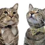 Klaus and Oskar the Blind Cat. Their Facebook page helps share information about other special needs animals that are looking for homes.