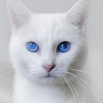 Don't stare too long. they say the eyes of a cat can steal your soul.