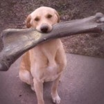 10. Big dogs are usually not picky eaters
