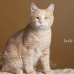 Jack is a blind kitty, was a stray that had a virus go untreated. Now he is inspiring everyone with his joy of life.