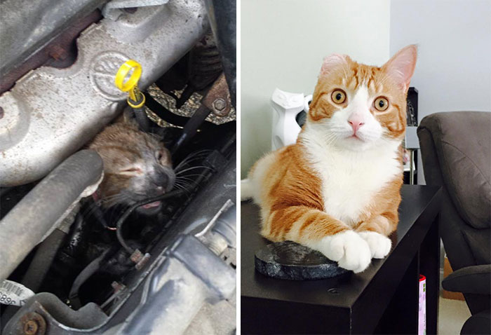 before after rescue cat