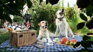 doggy-themed event at the upcoming Adelaide Food and Wine Festiva