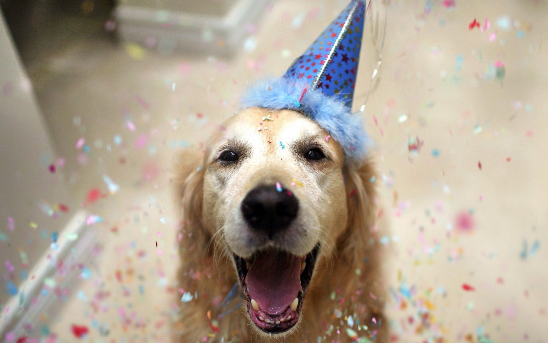 25  best ideas about Happy birthday dog on Pinterest | Happy ...