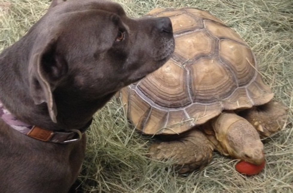 dog and turtle