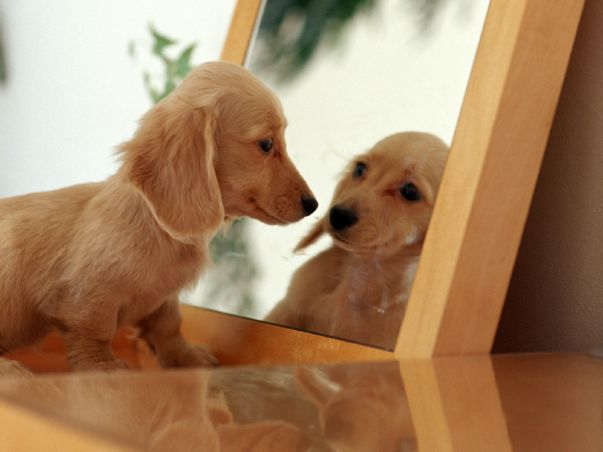 dog-looking-in-mirror