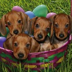 8. These adorable puppies that are the Easter surprise