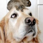 The dog who has bunnies on the brain