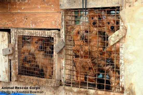 how to tell if a breeder is a puppy mill