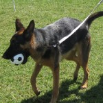 Planet Dog Soccer Ball: This toy is perfect if your dog aspires to be the next David Beckham. This ball measures about five inches in diameter making it the perfect size for any dog. Unlike an actual soccer ball, this dog toy is a sturdy hollow ball which means it won't pop.
