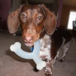 Nylabone DuraChew Wishbone: This toy is a variation of the stick bone and also comes in a variety of sizes and flavors.