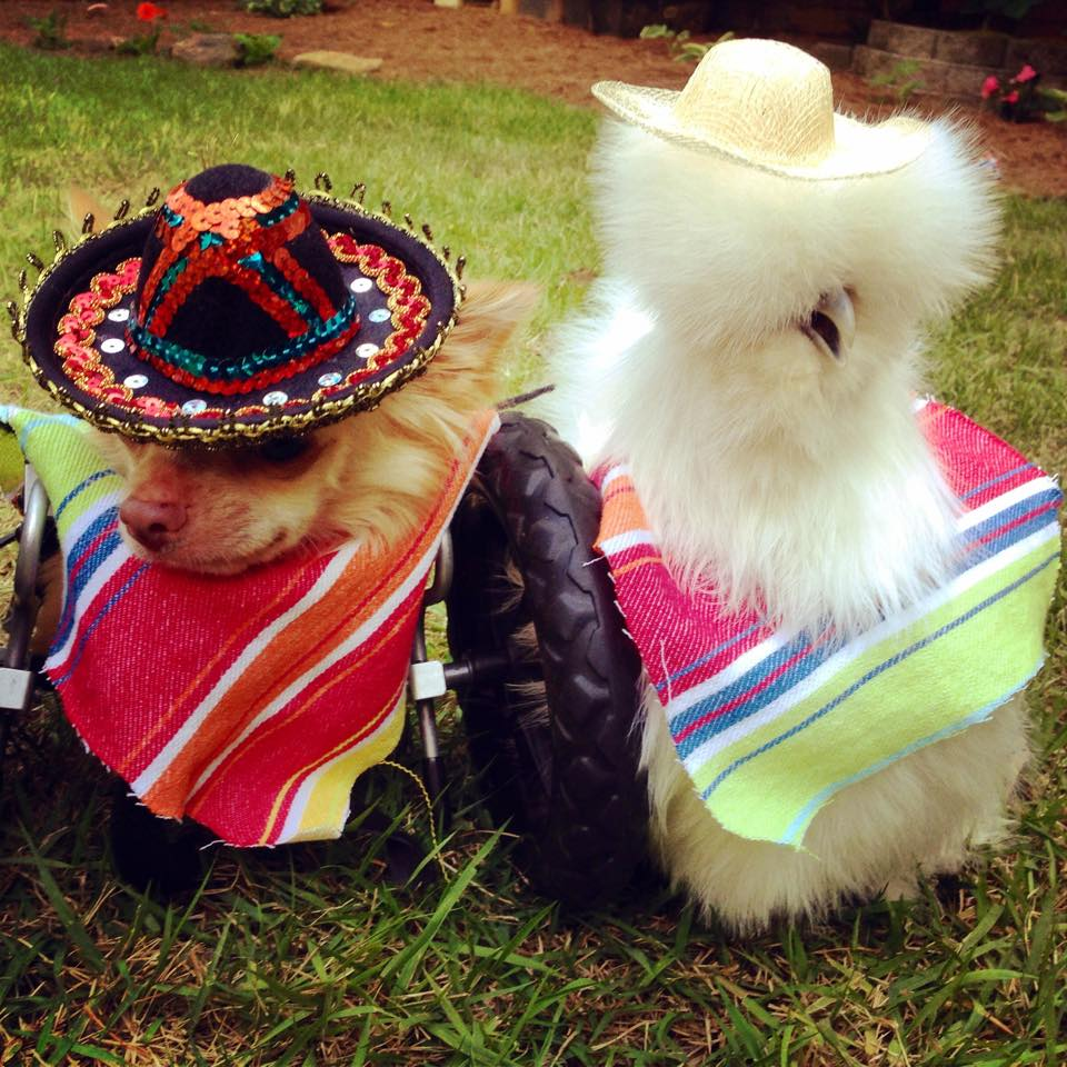 All dressed up for Cinco De Mayo