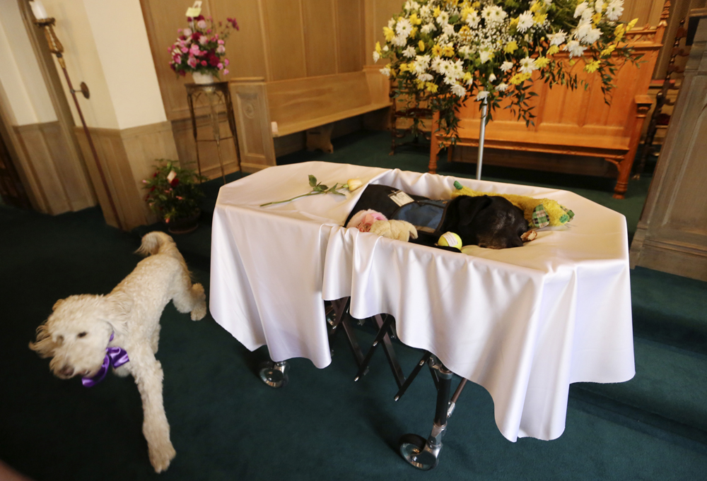 Dog Funeral Home