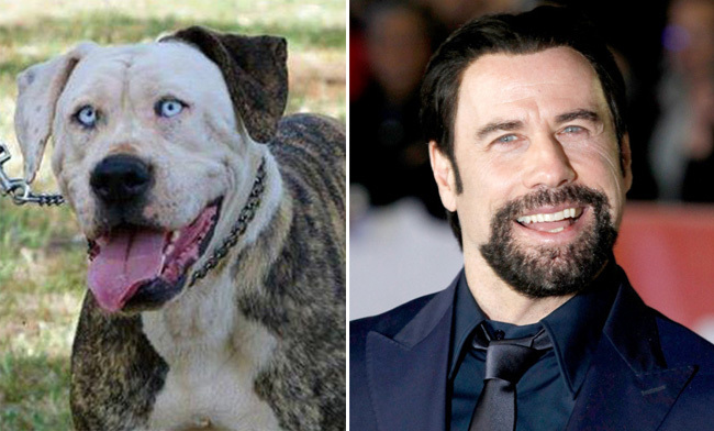 Dogs and Famous People Who Look Alike Archives - 3MillionDogs