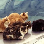 10. To keep a cat off your car, put a hat on your hood.