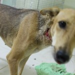 This is MIssy who was found alive, but with a bullet in her neck