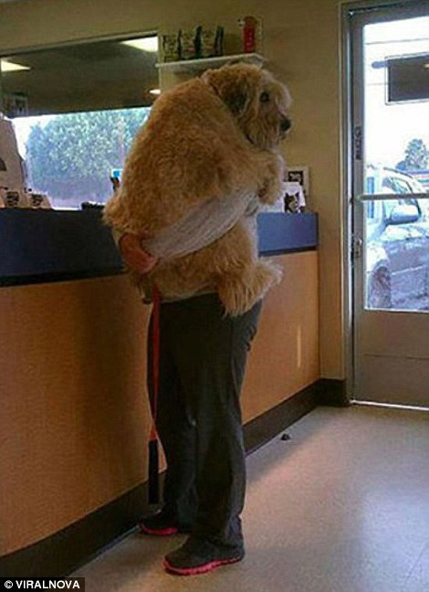 5. I Go To The Vet Too Much: Your dog may go once a year for a quick check up at the vet but it's just too much time to be at the vet.