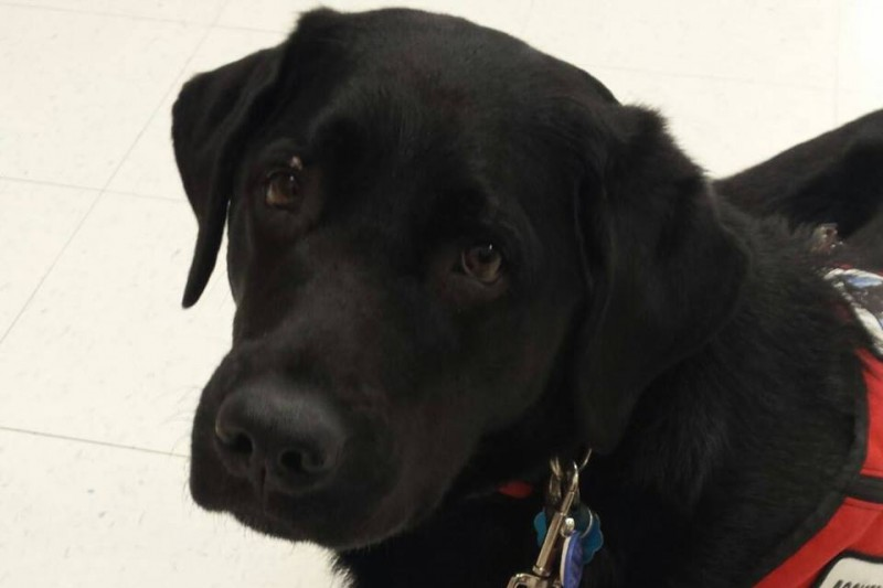 Can A Two Year Old Dog Become A Service Dog