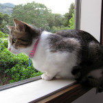 7. When moving to a new home, you must put the cat through the window instead of the door. This way it will not leave.