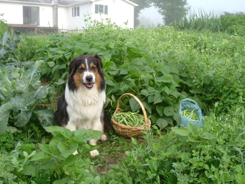 7 Ways To Dog Proof Your Garden