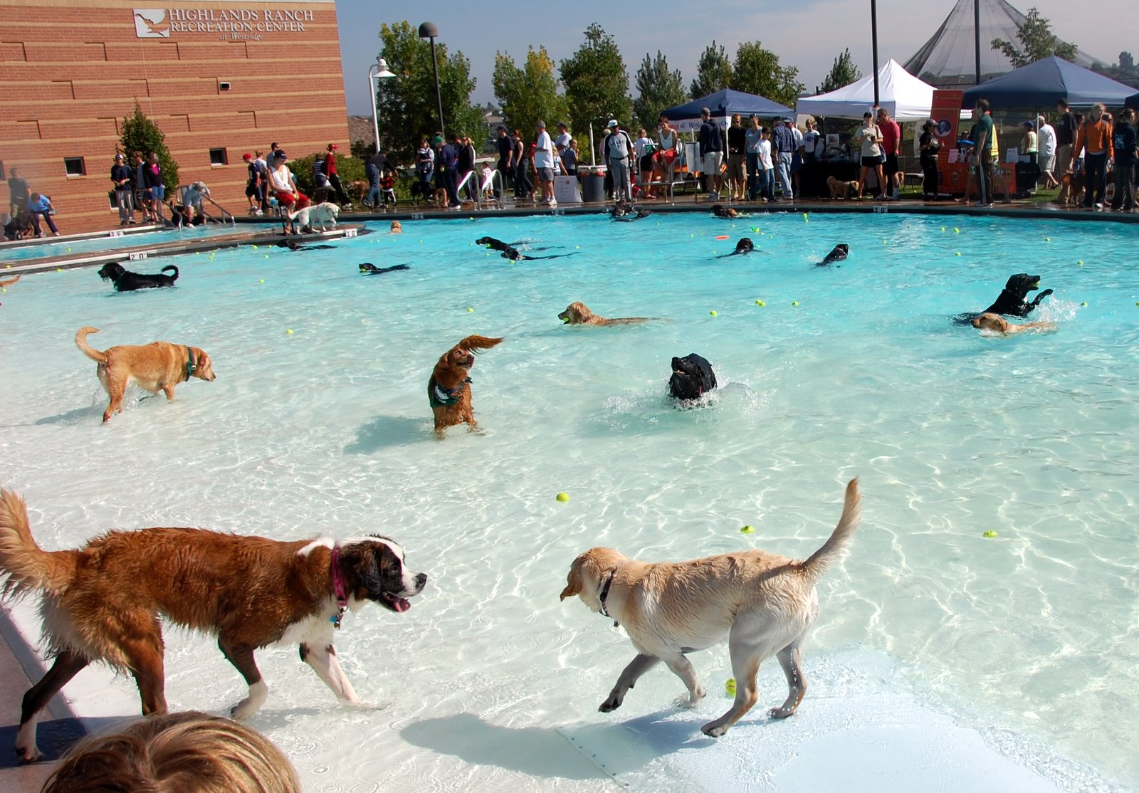 Pool Season Means Pool Safety For Dogs