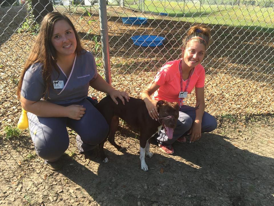 Caitlyn with Melissa and Kaitlyn.  Both Melissa and Kaitlyn work to organize play groups assess the dogs in the shelter