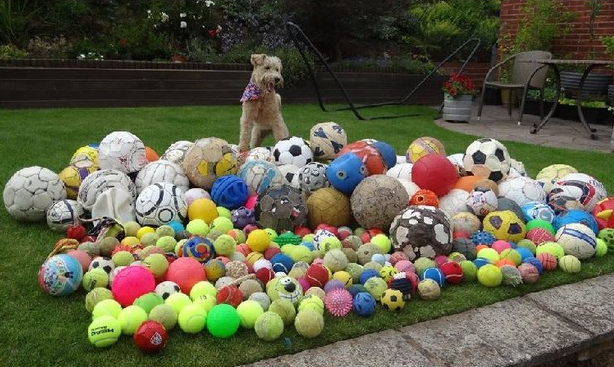 7. I Don't Have Enough Balls: Tennis balls. All the balls. There are never enough balls to play fetch with. It's a tragedy.