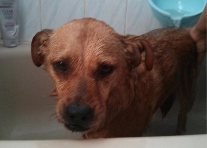 8. I Bathe Too Frequently: Every so often your dog gets  a bath and that's fine. But your dog would probably tell you it's far too often and they smell terrible after; you know, like flowers and stuff.