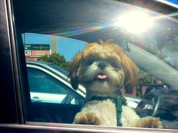 6.7.15-Law-to-Save-Dogs-in-Hot-Cars0